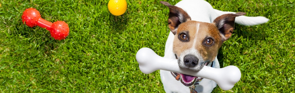 Home Page - UCLA Canine Learning Academy